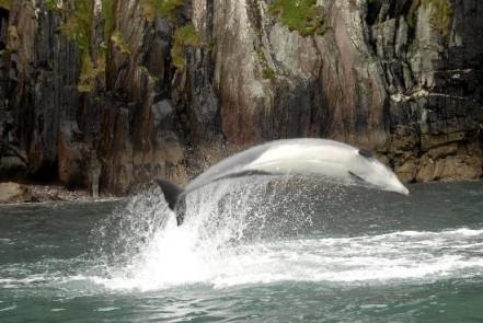 delfin enjoyasturias