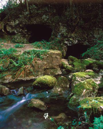 Cueva del Lloviu