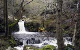 Senda la Regueirina, Asturias