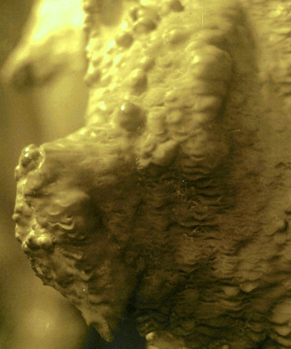 Gruta de Abedales (9)